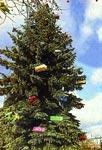Der Werstener Weihnachtsbaum (Düsseldorfer Anzeiger)